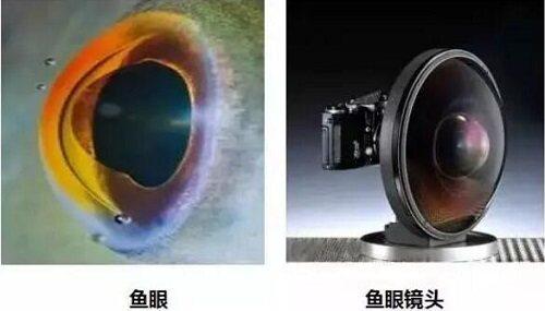 基于仿生学原理制作的鱼眼摄像机通过吸顶安装