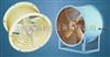 CT35系列耐高温防油防潮轴流风机